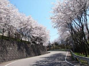 石川県鋳鍛工業団地の桜